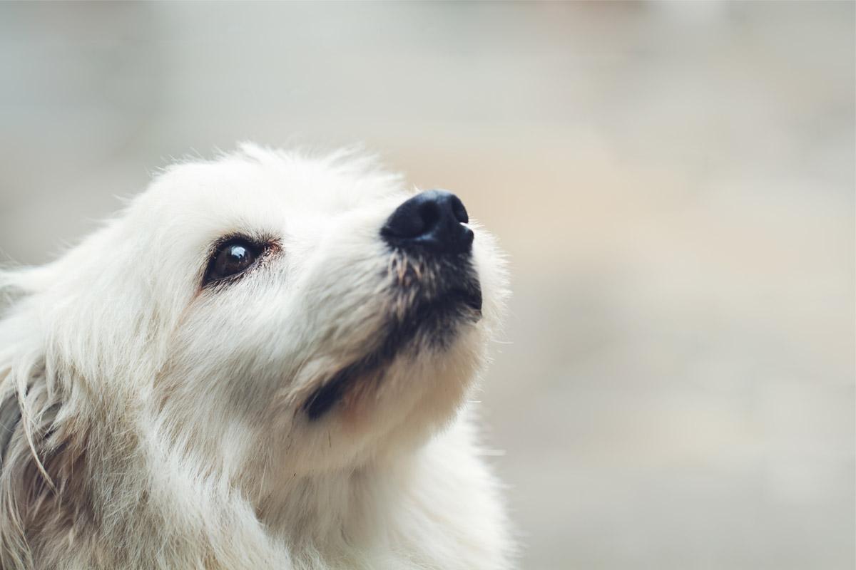 PawsitiveWalks dog walker South East London